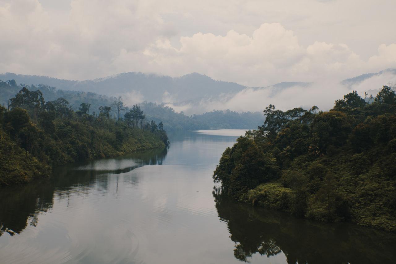 DAVID DAUB / HAMBURG MALAYSIAN WOODS
